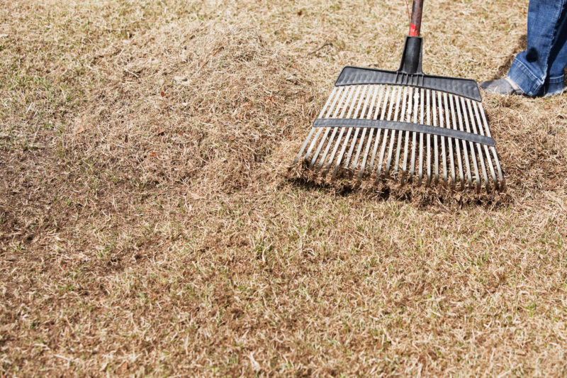Dethatching and Aerating