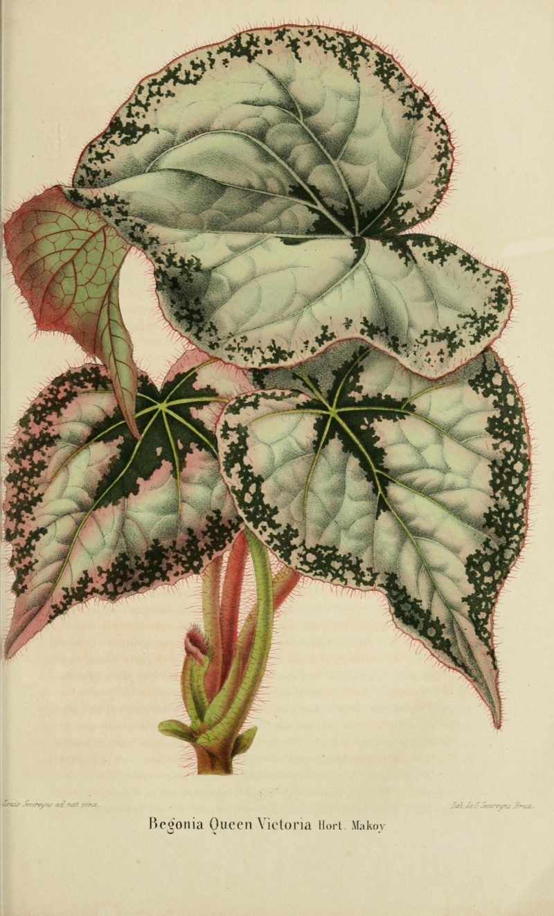 These Vintage Botanical Illustrations Will Have You Gaping in ...