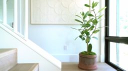 How to Grow Bamboo, Houseplant-Style - Sunset Magazine
