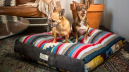 Acorn + Oakleaf Dog Bed