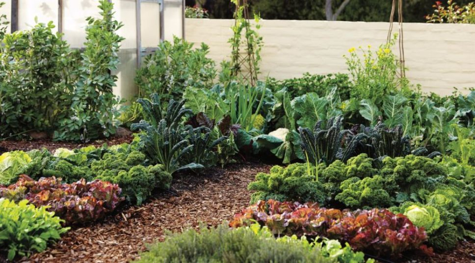 How to Grow the Right Edible Garden for Every Space