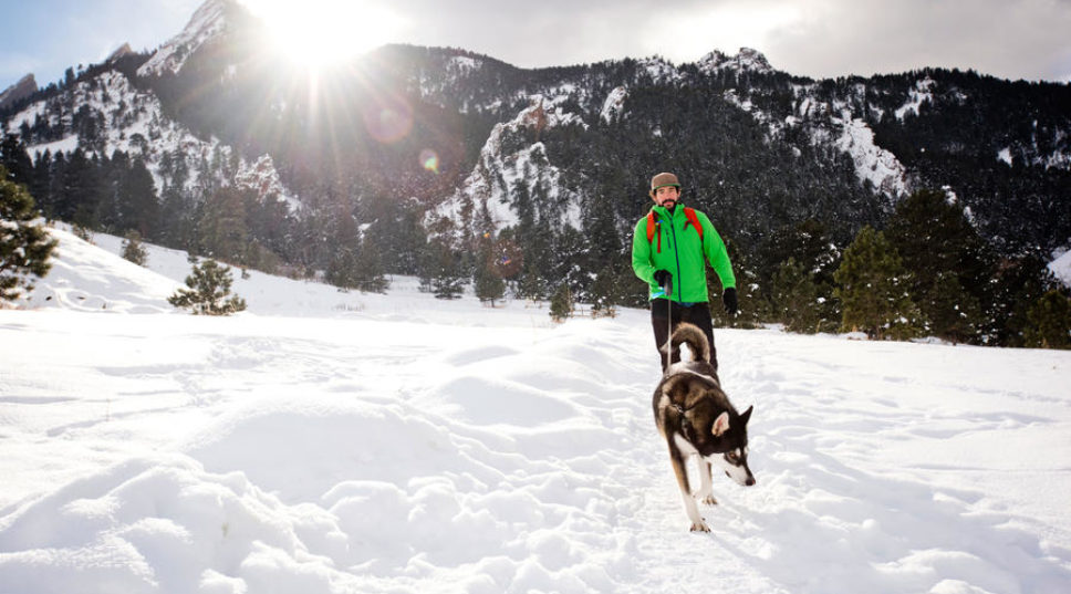 A Photographer's Tips on Traveling with Your Dog