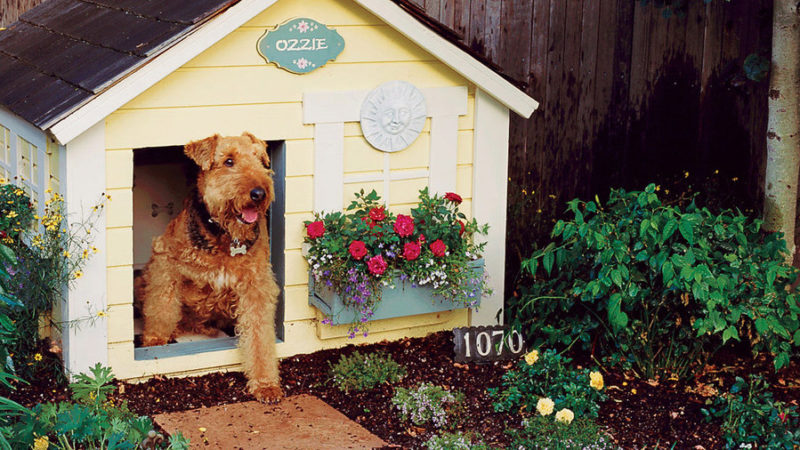 Backyard Ideas For Dogs Sunset Magazine
