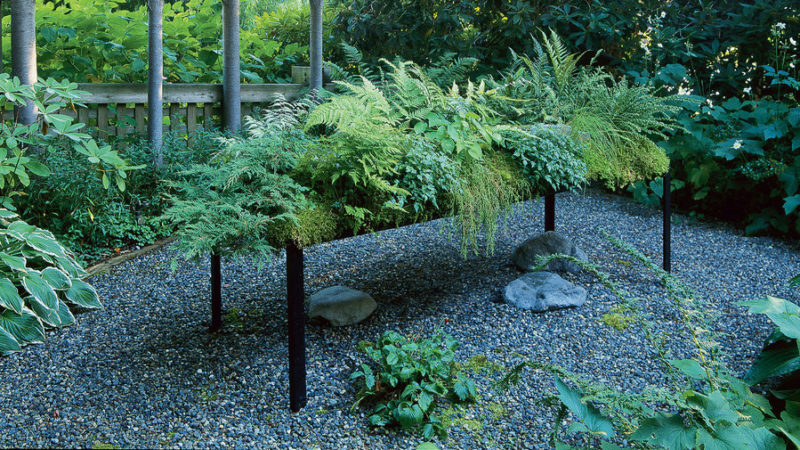 Planting A Low Water Fern Garden