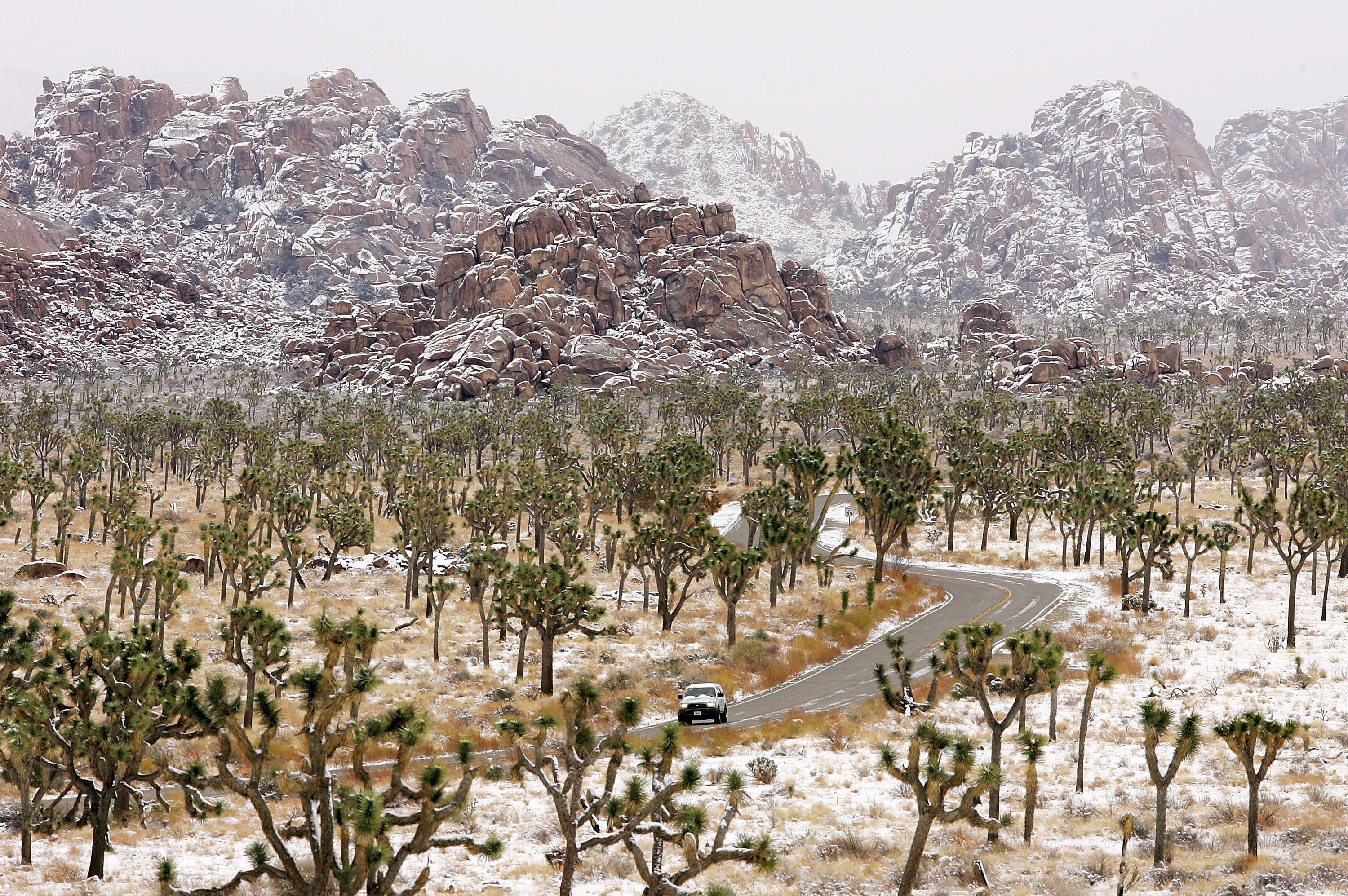 Joshua Tree National Park Looks Insanely Beautiful After A