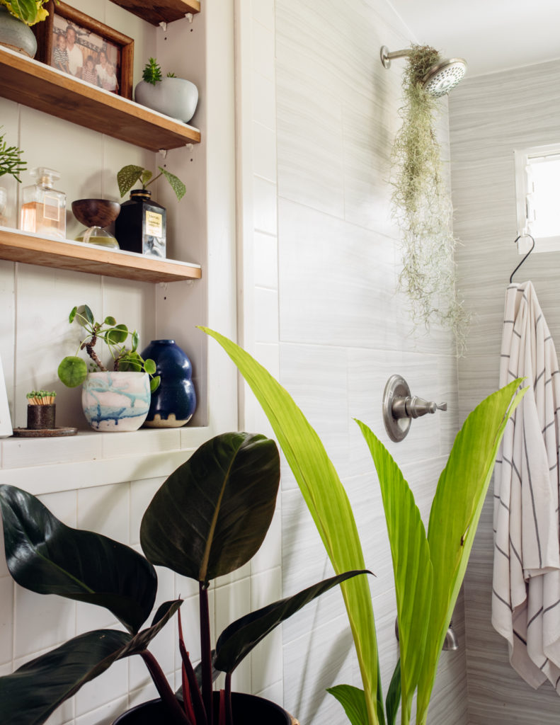 Indoor Plant Styling Tips from a Hawaii-based Plant Store Owner