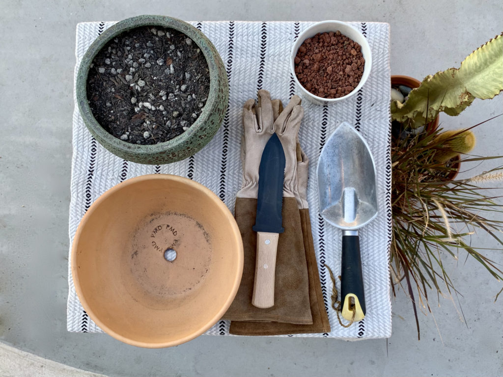 How to Propagate a Ponytail Palm