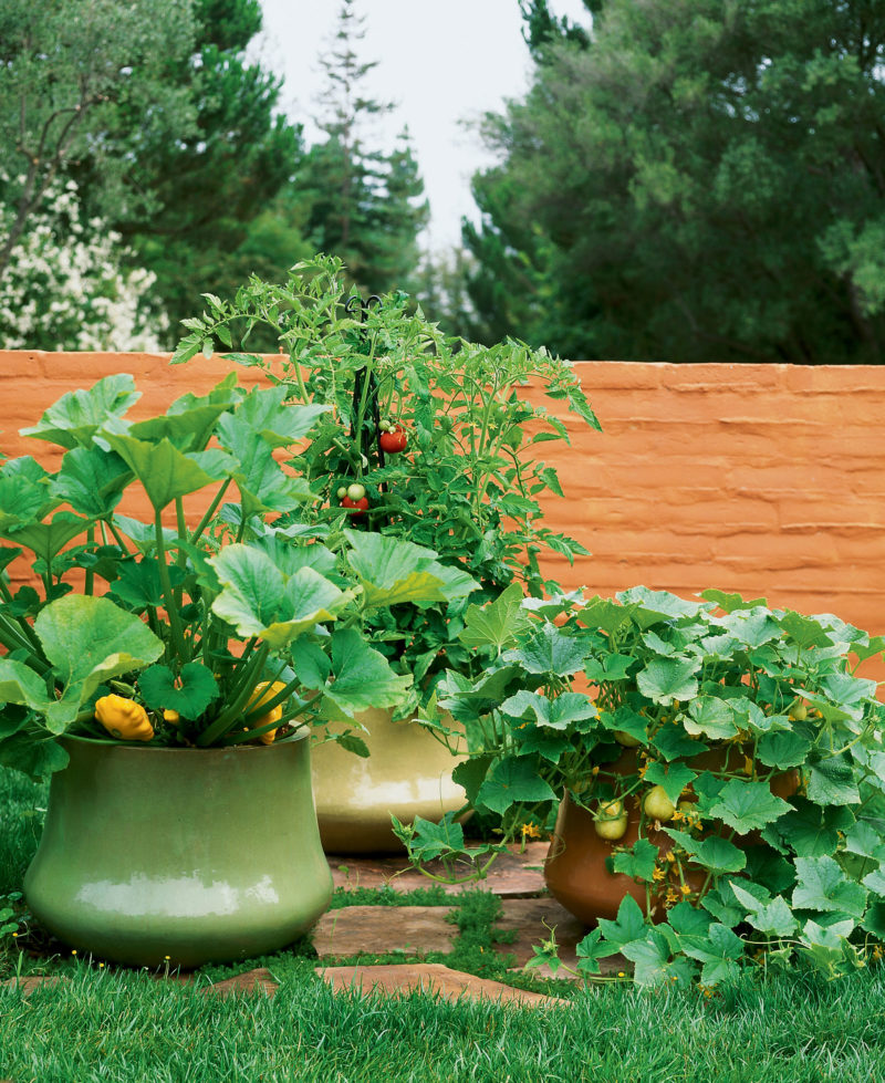 Growing Vegetables In Pots
