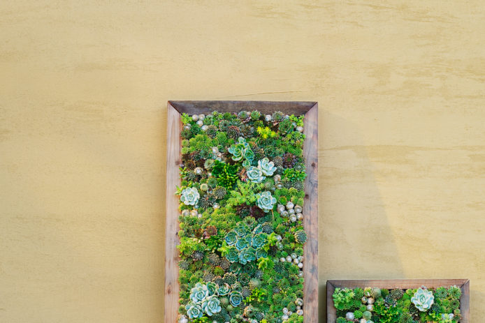 Make Your Own DIY Vertical Succulent Wall Planters - Sunset