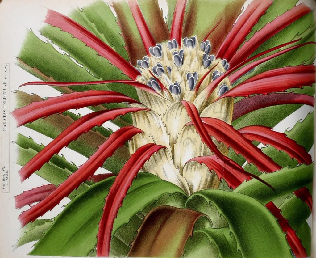 These Vintage Botanical Illustrations Will Have You Gaping in Wonder