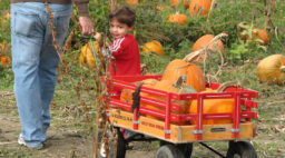 Little boy and dad pulling a wagon at a Halloween event in Snohomish, WA