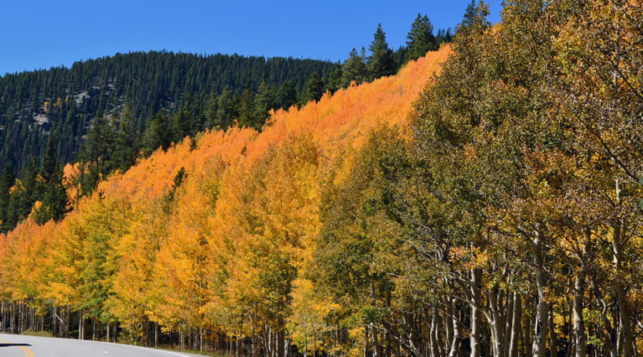 Fall colors, US 50 near Monarch, west of Salida, CO. 14 September 2018.