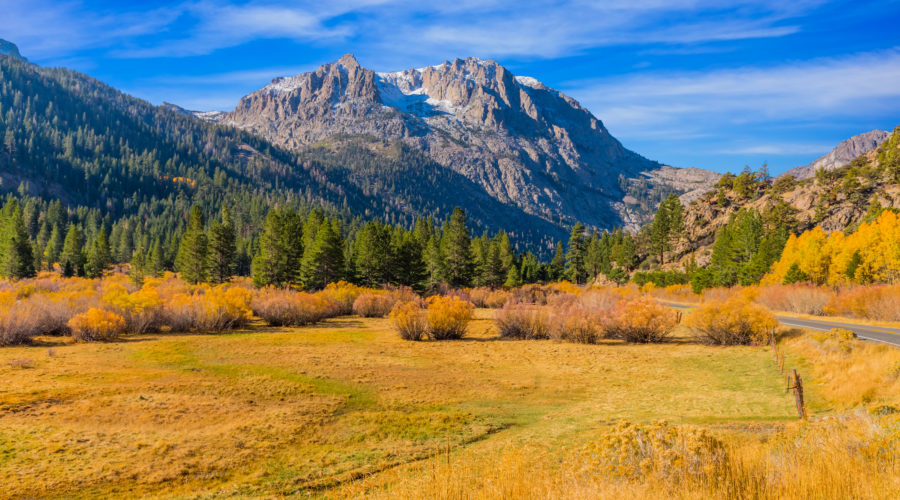 Meadow with autumn color and evergreen trees in June Lake Loop Eastern Sierra, California