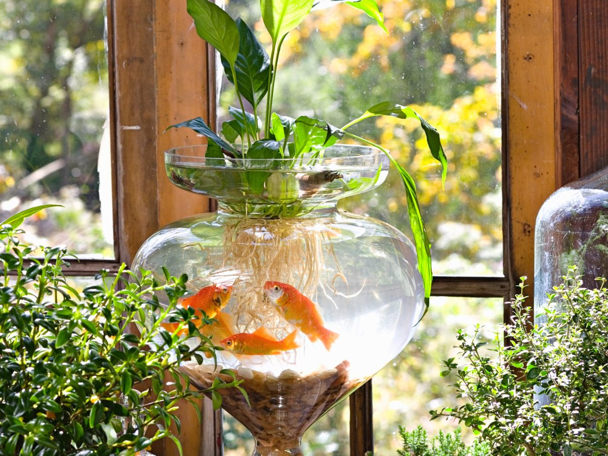 These Aquatic Houseplants Make a Splash Indoors
