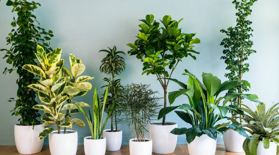 Stunning Foliage Houseplants And Tips For How To Grow Them