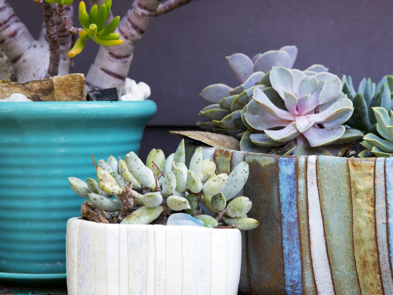container garden with succulents