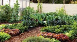 Cold Weather Vegetable Garden Cornerstone