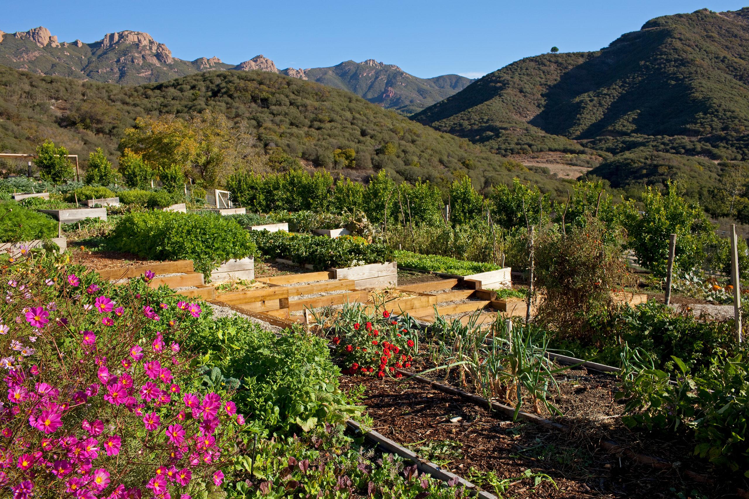 Garden overlooking the Malibu hillside.